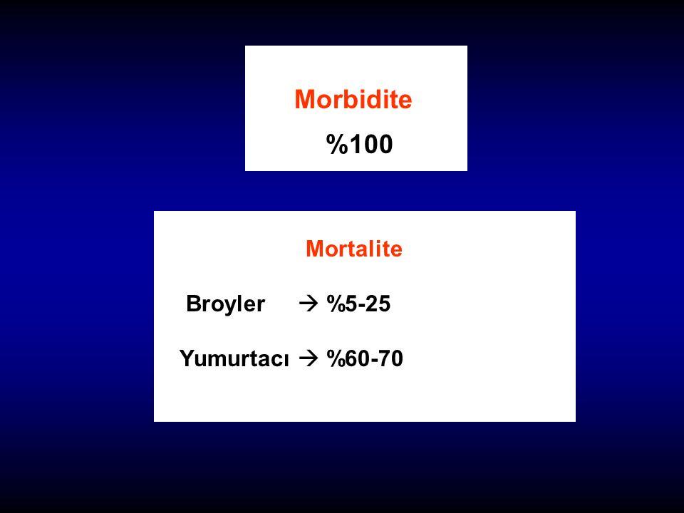 Morbidite %100 Mortalite Broyler  %5-25 Yumurtacı  %60-70