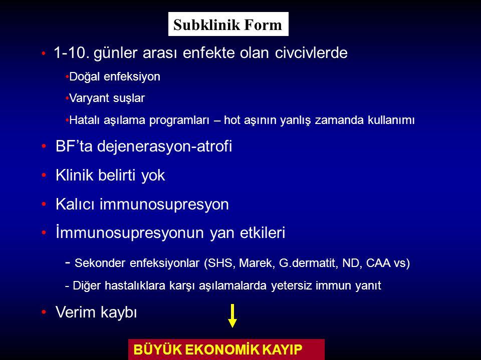 Klinik Semptomlar Düşkünlük Tüylerde kabarma Beyaz sulu ishal Yem tüketiminde azalma