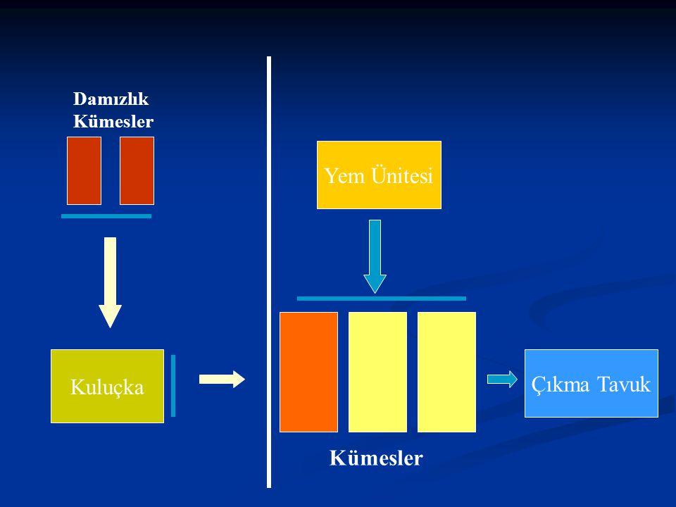 YUMURTA TAVUKLARINDA SAĞLIK KONTROLÜ Prof. Dr. Mehmet Akan Ankara Üniversitesi Veteriner Fakültesi Mikrobiyoloji Anabilim Dalı