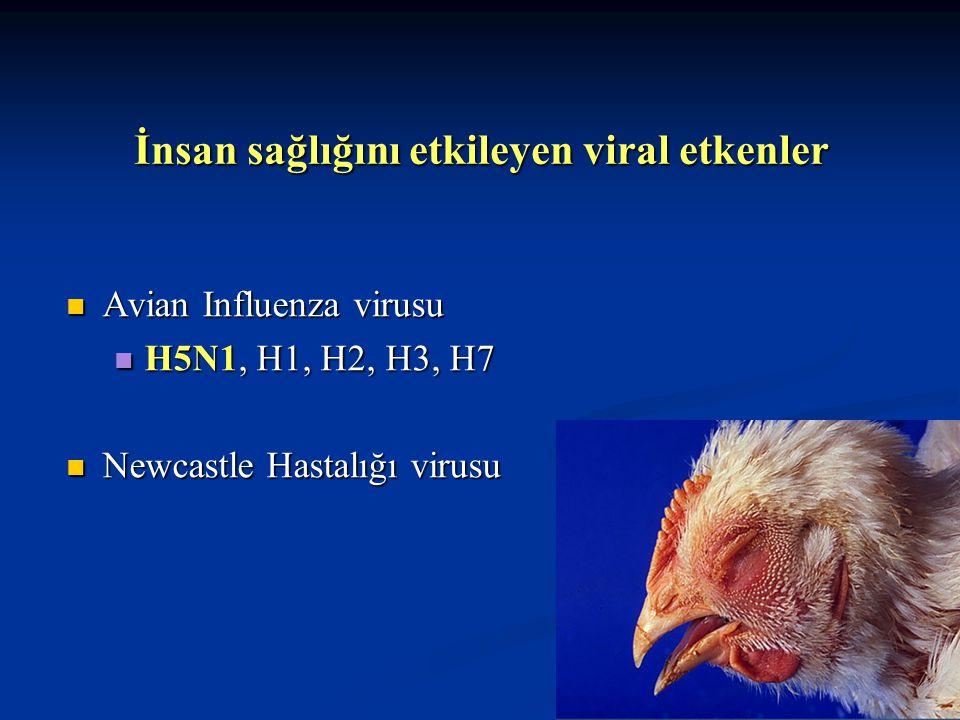 Kanatlı ve İnsan Sağlığını Etkileyen Hastalıklar