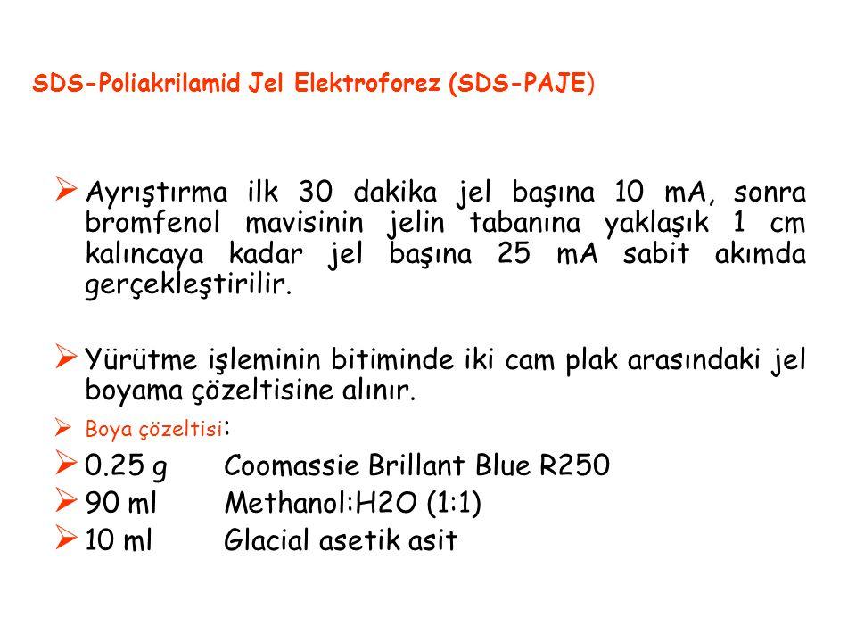  Ayrıştırma ilk 30 dakika jel başına 10 mA, sonra bromfenol mavisinin jelin tabanına yaklaşık 1 cm kalıncaya kadar jel başına 25 mA sabit akımda gerçekleştirilir.