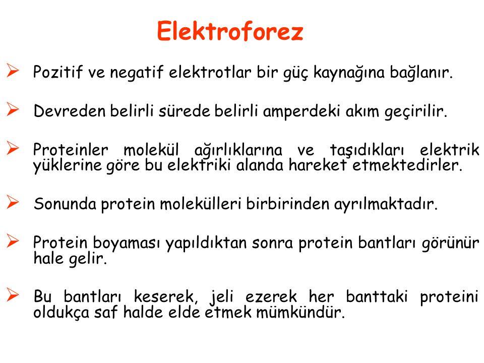  Pozitif ve negatif elektrotlar bir güç kaynağına bağlanır.