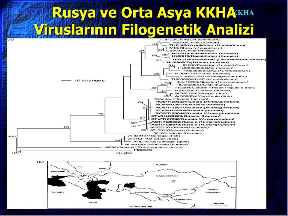 KKHA Rusya ve Orta Asya KKHA Viruslarının Filogenetik Analizi