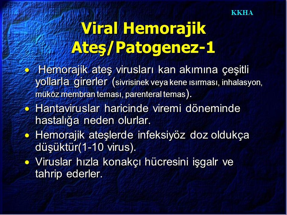 KKHA Viral Hemorajik Ateş/Patogenez-1  Hemorajik ateş virusları kan akımına çeşitli yollarla girerler ( sivrisinek veya kene ısırması, inhalasyon, mü