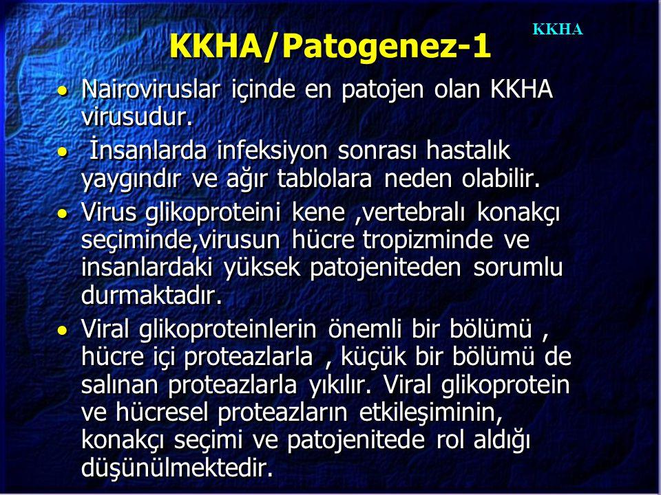 KKHA KKHA/Patogenez-1  Nairoviruslar içinde en patojen olan KKHA virusudur.  İnsanlarda infeksiyon sonrası hastalık yaygındır ve ağır tablolara nede
