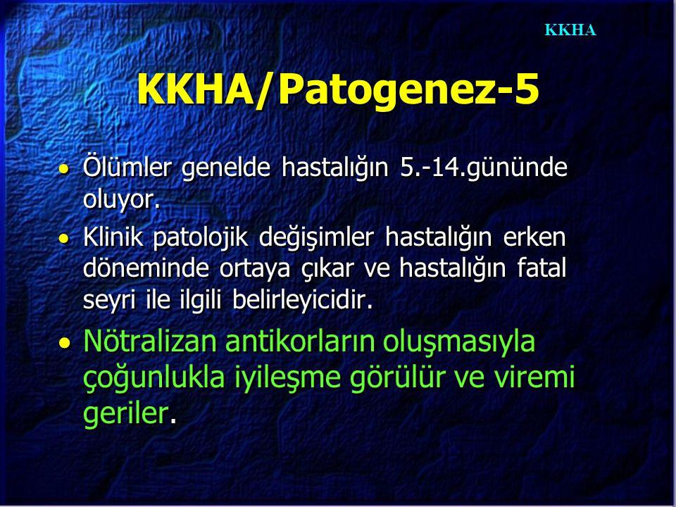 KKHA KKHA/Patogenez-5  Ölümler genelde hastalığın 5.-14.gününde oluyor.  Klinik patolojik değişimler hastalığın erken döneminde ortaya çıkar ve hast