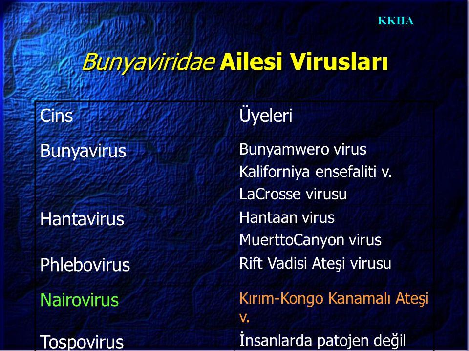 KKHA Bunyavirusların Özellikleri  Küresel yapıda, zarflı viruslardır,  90-100 nm çapındadır,  Nükleoproteinle birleşik tek sarmal RNA'ları vardır,  Yüzeylerinde iki glikoprotein bulunur ( nötralizasyon ve hemaglütinasyondan sorumlu ),  Sitoplazmada çoğalır,  Viriyonunda transkriptazı vardır,  Yakın akraba üyeler arasında RNA segment alışverişi olabilir.