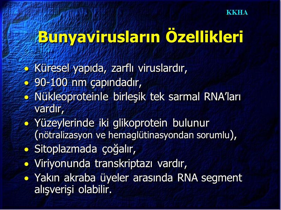 KKHA Bunyavirusların Özellikleri  Küresel yapıda, zarflı viruslardır,  90-100 nm çapındadır,  Nükleoproteinle birleşik tek sarmal RNA'ları vardır,