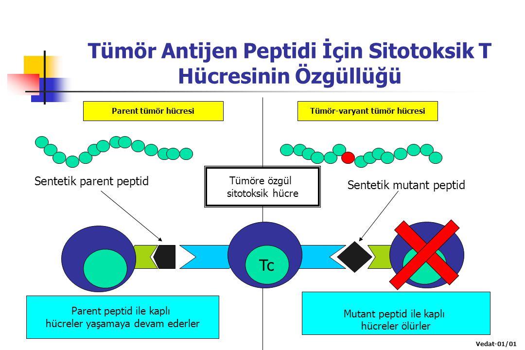 Tümör Antijen Peptidi İçin Sitotoksik T Hücresinin Özgüllüğü Parent tümör hücresiTümör-varyant tümör hücresi Tümöre özgül sitotoksik hücre Tc Sentetik