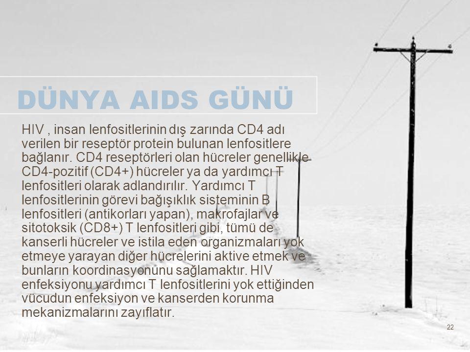 22 DÜNYA AIDS GÜNÜ HIV, insan lenfositlerinin dış zarında CD4 adı verilen bir reseptör protein bulunan lenfositlere bağlanır. CD4 reseptörleri olan hü