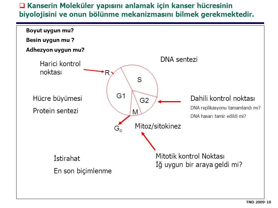 S G1 M G2 Boyut uygun mu? Besin uygun mu ? Adhezyon uygun mu? Harici kontrol noktası R Hücre büyümesi Protein sentezi GoGo İstirahat En son biçimlenme