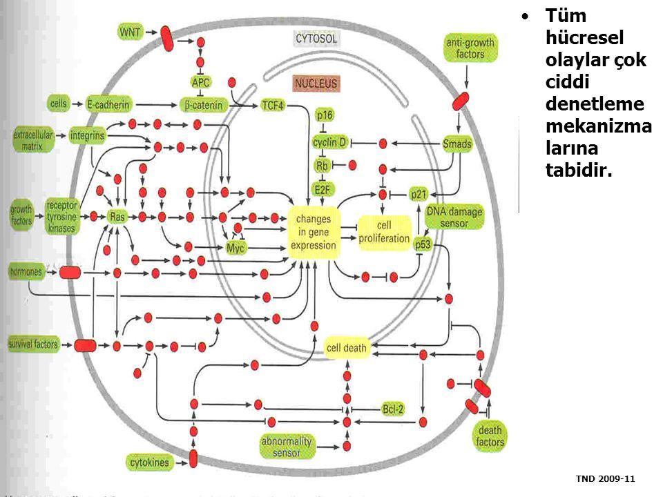 Tüm hücresel olaylar çok ciddi denetleme mekanizma larına tabidir. TND 2009-11