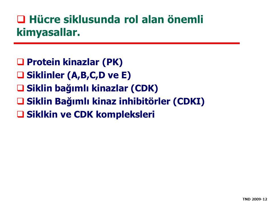  Hücre siklusunda rol alan önemli kimyasallar.  Protein kinazlar (PK)  Siklinler (A,B,C,D ve E)  Siklin bağımlı kinazlar (CDK)  Siklin Bağımlı ki