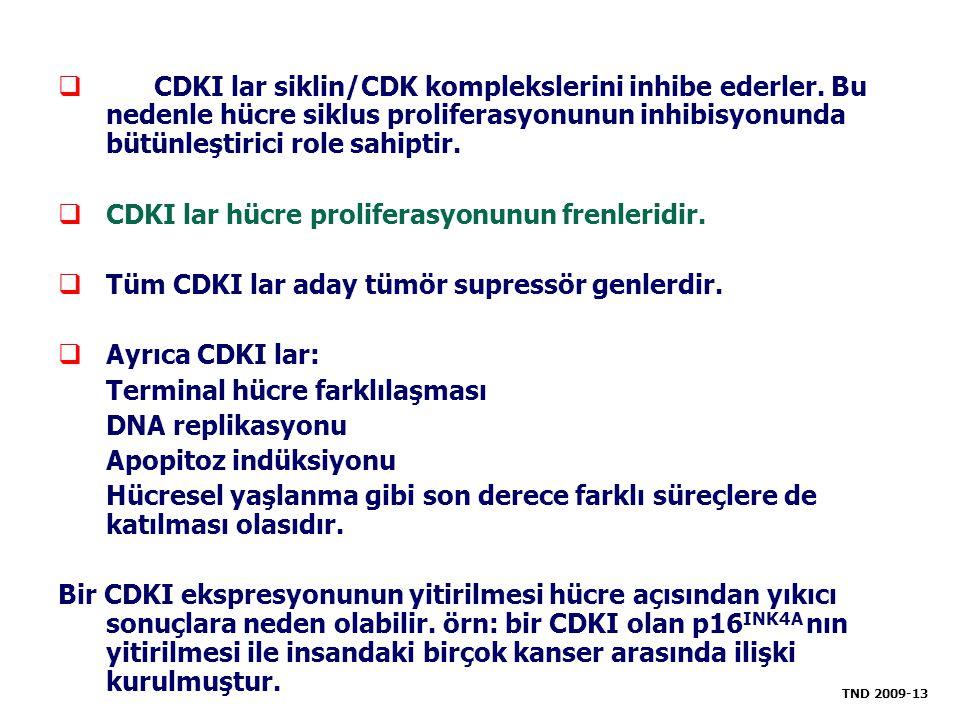  CDKI lar siklin/CDK komplekslerini inhibe ederler. Bu nedenle hücre siklus proliferasyonunun inhibisyonunda bütünleştirici role sahiptir.  CDKI lar