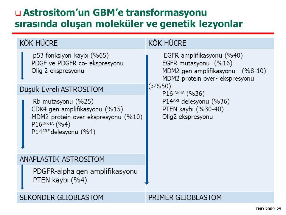 KÖK HÜCRE p53 fonksiyon kaybı (%65) PDGF ve PDGFR co- ekspresyonu Olig 2 ekspresyonu EGFR amplifikasyonu (%40) EGFR mutasyonu (%16) MDM2 gen amplifika