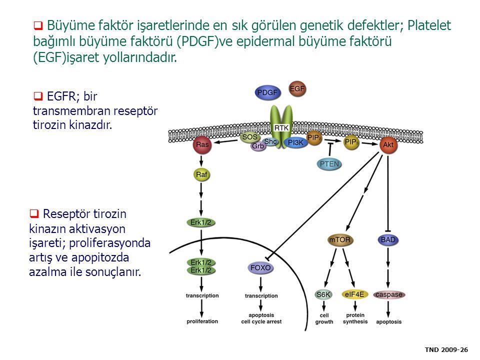  Büyüme faktör işaretlerinde en sık görülen genetik defektler; Platelet bağımlı büyüme faktörü (PDGF)ve epidermal büyüme faktörü (EGF)işaret yolların