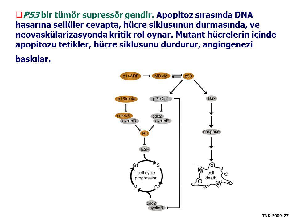 P53 bir tümör supressör gendir. Apopitoz sırasında DNA hasarına sellüler cevapta, hücre siklusunun durmasında, ve neovaskülarizasyonda kritik rol oy