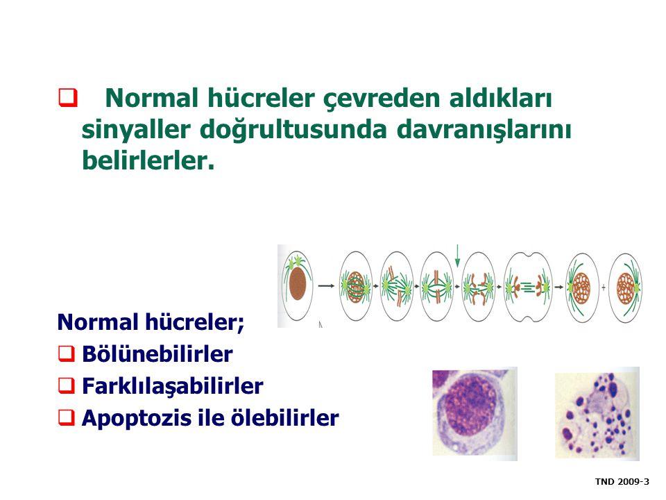  Normal hücreler çevreden aldıkları sinyaller doğrultusunda davranışlarını belirlerler. Normal hücreler;  Bölünebilirler  Farklılaşabilirler  Apop