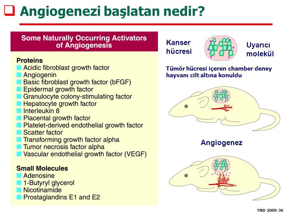  Angiogenezi başlatan nedir? TND 2009-36 Kanser hücresi Uyarıcı molekül Tümör hücresi içeren chamber deney hayvanı cilt altına konuldu Angiogenez