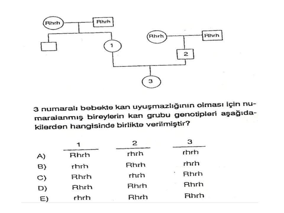 İnsanda A, B, O, AB gruplarından bağımsız M, N grupları da vardır.