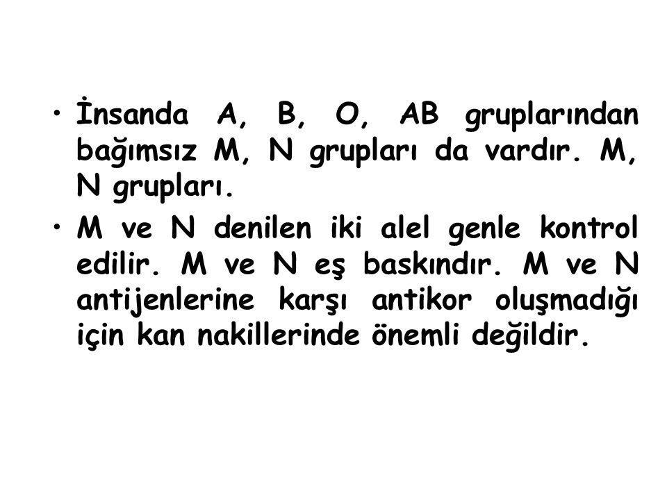 İnsanda A, B, O, AB gruplarından bağımsız M, N grupları da vardır. M, N grupları. M ve N denilen iki alel genle kontrol edilir. M ve N eş baskındır. M