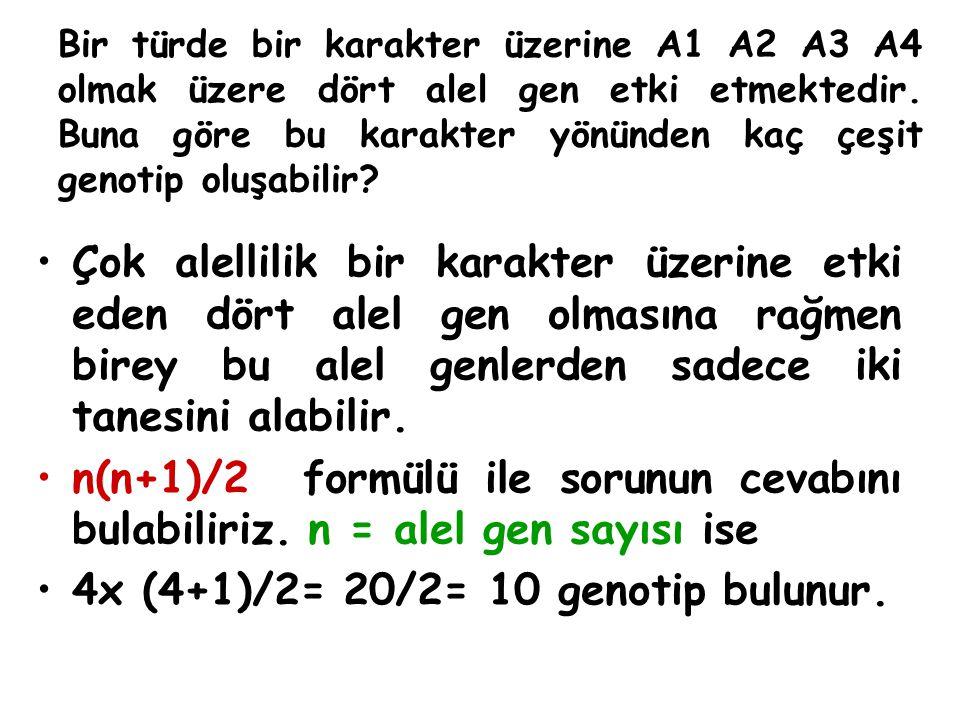 Bir türde bir karakter üzerine A1 A2 A3 A4 olmak üzere dört alel gen etki etmektedir. Buna göre bu karakter yönünden kaç çeşit genotip oluşabilir? Çok