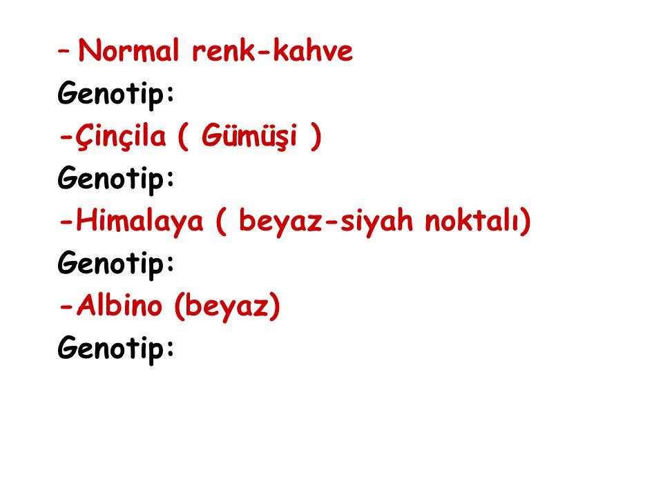 –Normal renk-kahve Genotip: -Çinçila ( Gümüşi ) Genotip: -Himalaya ( beyaz-siyah noktalı) Genotip: -Albino (beyaz) Genotip: