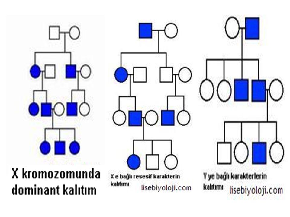 3.Bağlı genler Aynı kromozom üzerinde bulunan farklı özelliklere ait genlere bağlı genler denir.