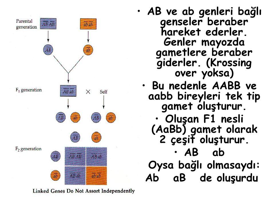 AB ve ab genleri bağlı genseler beraber hareket ederler. Genler mayozda gametlere beraber giderler. (Krossing over yoksa) Bu nedenle AABB ve aabb bire
