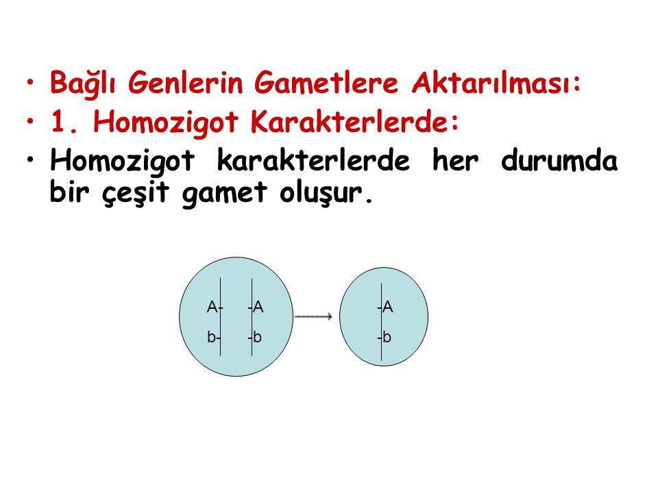 Bağlı Genlerin Gametlere Aktarılması: 1. Homozigot Karakterlerde: Homozigot karakterlerde her durumda bir çeşit gamet oluşur. A- b- -A -b -A -b