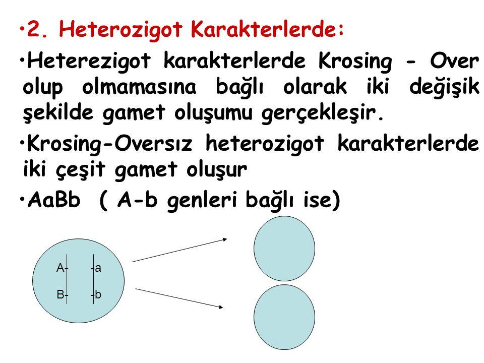 2. Heterozigot Karakterlerde: Heterezigot karakterlerde Krosing - Over olup olmamasına bağlı olarak iki değişik şekilde gamet oluşumu gerçekleşir. Kro