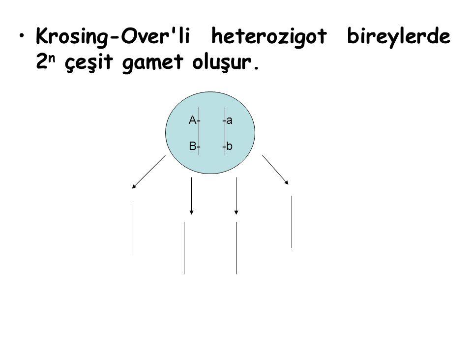 Krosing-Over'li heterozigot bireylerde 2 n çeşit gamet oluşur. A- B--b -a