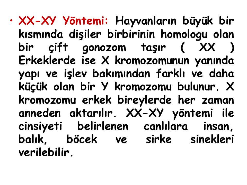 XX-XY Yöntemi: Hayvanların büyük bir kısmında dişiler birbirinin homologu olan bir çift gonozom taşır ( XX ) Erkeklerde ise X kromozomunun yanında yap