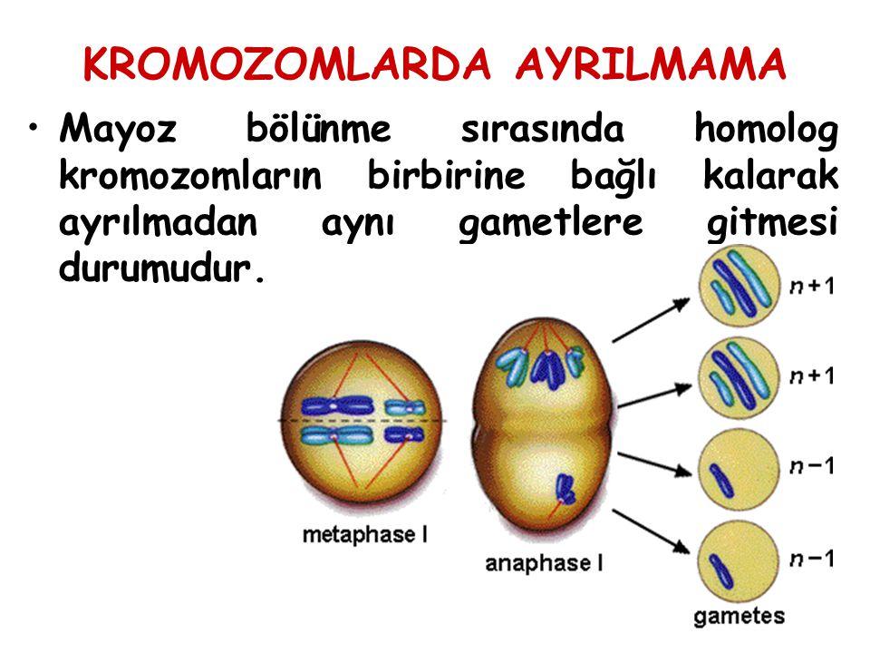 KROMOZOMLARDA AYRILMAMA Mayoz bölünme sırasında homolog kromozomların birbirine bağlı kalarak ayrılmadan aynı gametlere gitmesi durumudur.