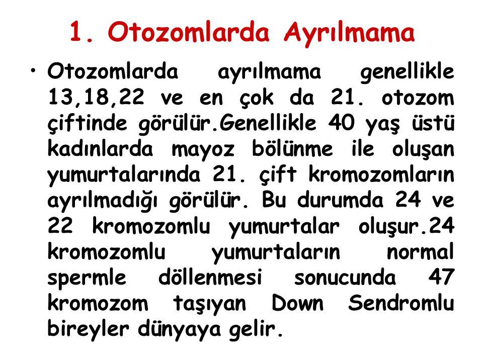 1. Otozomlarda Ayrılmama Otozomlarda ayrılmama genellikle 13,18,22 ve en çok da 21. otozom çiftinde görülür.Genellikle 40 yaş üstü kadınlarda mayoz bö