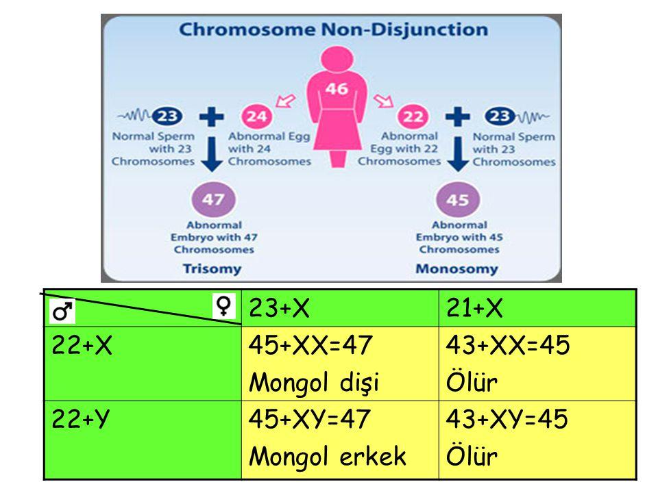 23+X21+X 22+X45+XX=47 Mongol dişi 43+XX=45 Ölür 22+Y45+XY=47 Mongol erkek 43+XY=45 Ölür