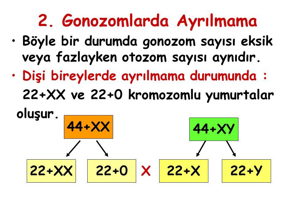 2. Gonozomlarda Ayrılmama Böyle bir durumda gonozom sayısı eksik veya fazlayken otozom sayısı aynıdır. Dişi bireylerde ayrılmama durumunda : 22+XX ve
