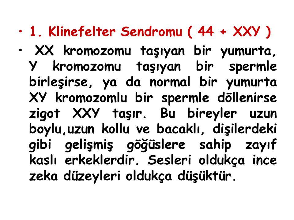 1. Klinefelter Sendromu ( 44 + XXY ) XX kromozomu taşıyan bir yumurta, Y kromozomu taşıyan bir spermle birleşirse, ya da normal bir yumurta XY kromozo