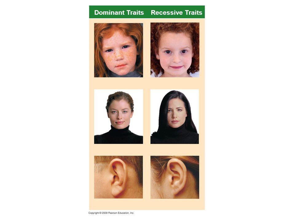 Homozigot: Bir karakteri kontrol eden 2 genin de (alel genlerin) aynı olmasıdır.(AA, aa) Heterozigot(Melez-Hibrit) Bir karakteri kontrol eden 2 genin de (alel genlerin) farklı olmasıdır.(Aa) Arı Döl( Saf ırk ) : Homozigot genotipte olan ve hep aynı çeşit gametleri oluşturan ırk.