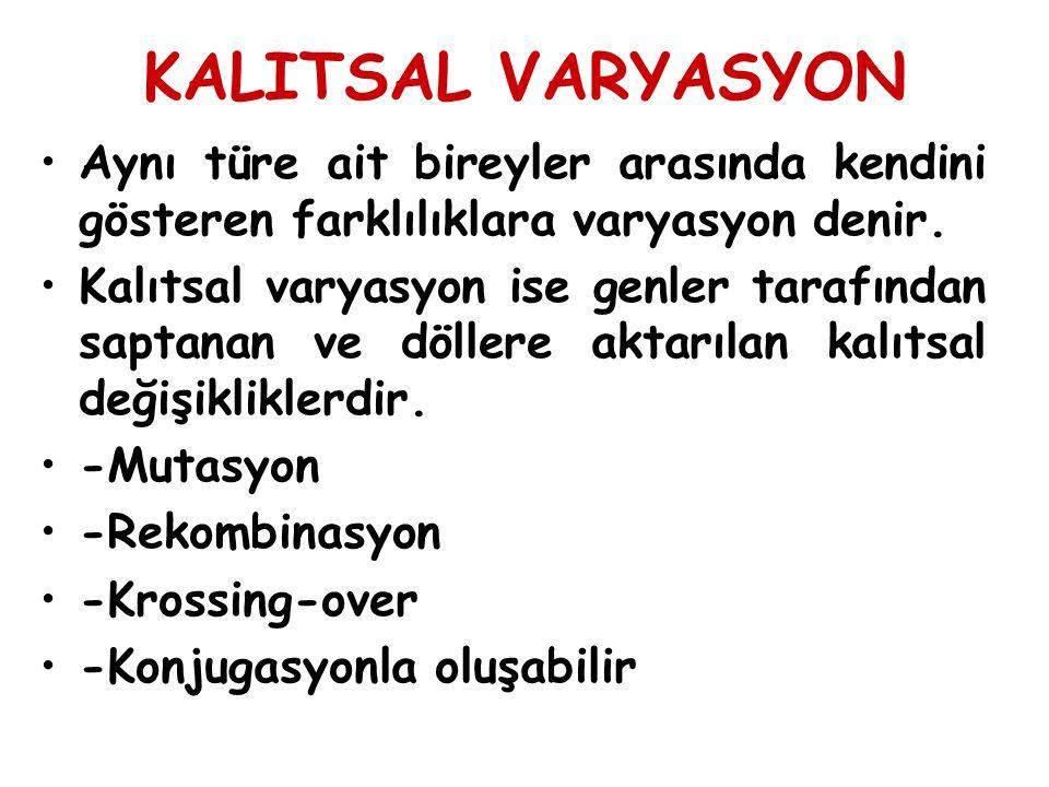 KALITSAL VARYASYON Aynı türe ait bireyler arasında kendini gösteren farklılıklara varyasyon denir. Kalıtsal varyasyon ise genler tarafından saptanan v