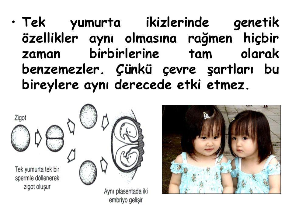 Tek yumurta ikizlerinde genetik özellikler aynı olmasına rağmen hiçbir zaman birbirlerine tam olarak benzemezler. Çünkü çevre şartları bu bireylere ay