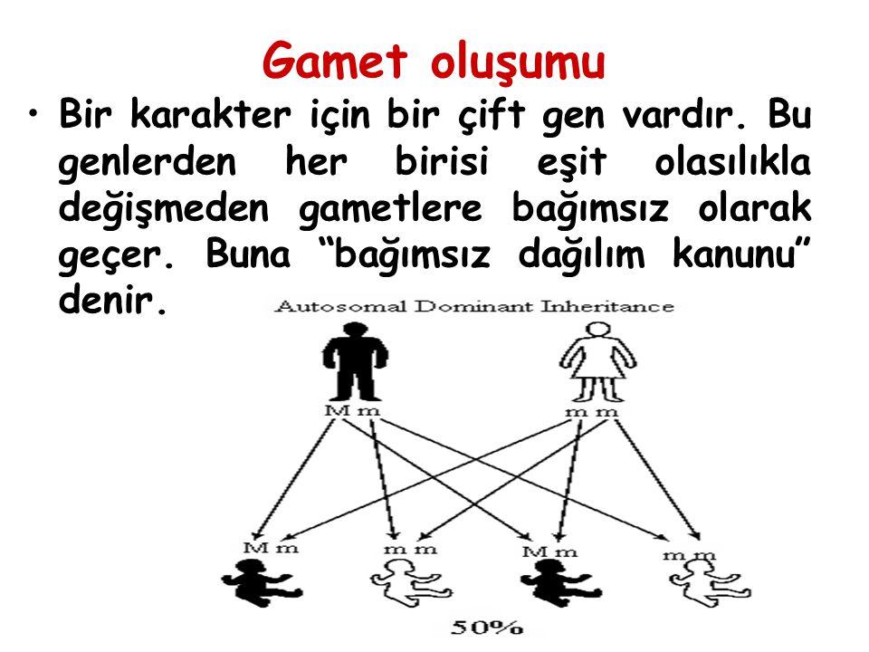"""Gamet oluşumu Bir karakter için bir çift gen vardır. Bu genlerden her birisi eşit olasılıkla değişmeden gametlere bağımsız olarak geçer. Buna """"bağımsı"""