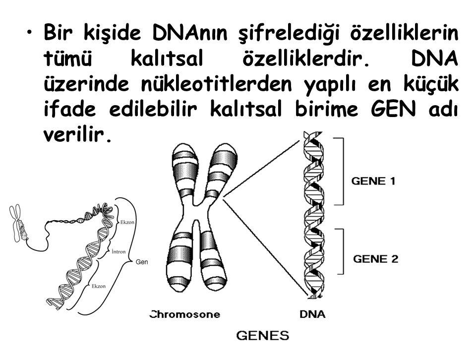 Bir kişide DNAnın şifrelediği özelliklerin tümü kalıtsal özelliklerdir. DNA üzerinde nükleotitlerden yapılı en küçük ifade edilebilir kalıtsal birime