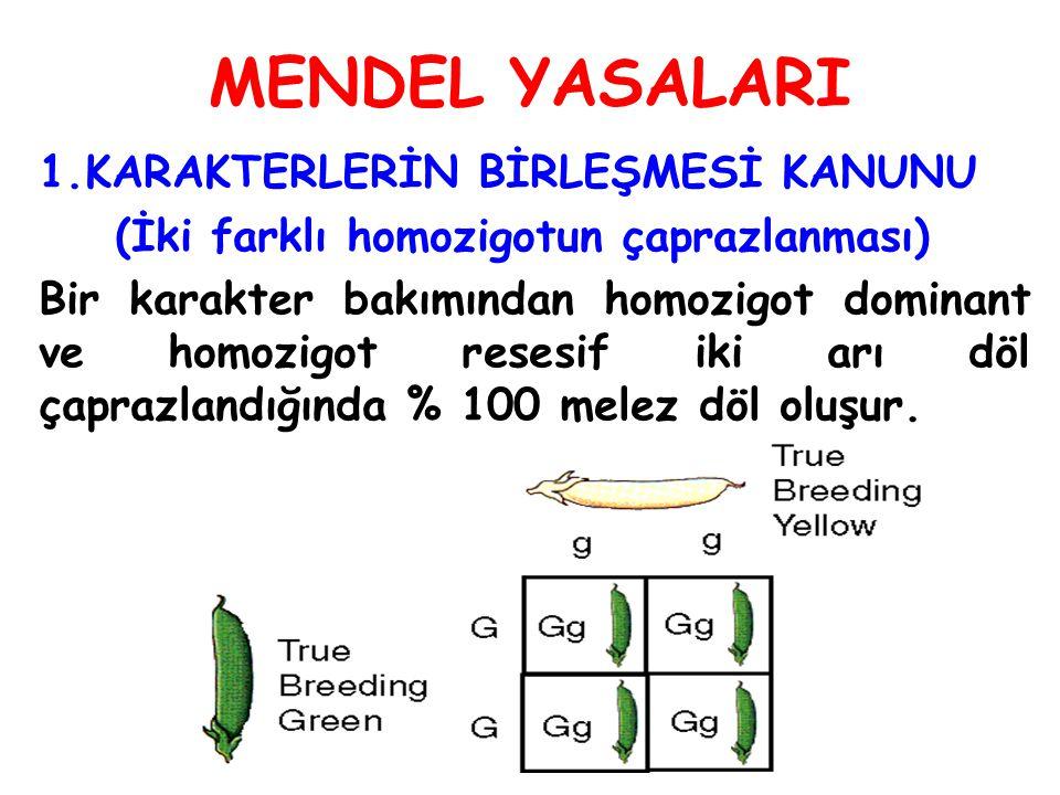 MENDEL YASALARI 1.KARAKTERLERİN BİRLEŞMESİ KANUNU (İki farklı homozigotun çaprazlanması) Bir karakter bakımından homozigot dominant ve homozigot reses