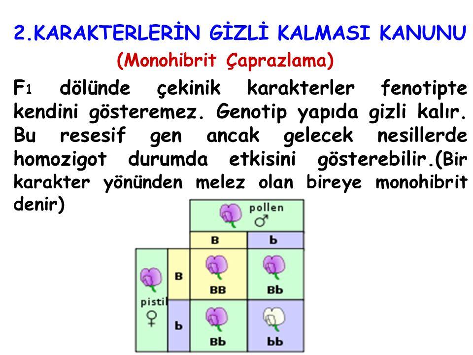 2.KARAKTERLERİN GİZLİ KALMASI KANUNU (Monohibrit Çaprazlama) F 1 dölünde çekinik karakterler fenotipte kendini gösteremez. Genotip yapıda gizli kalır.