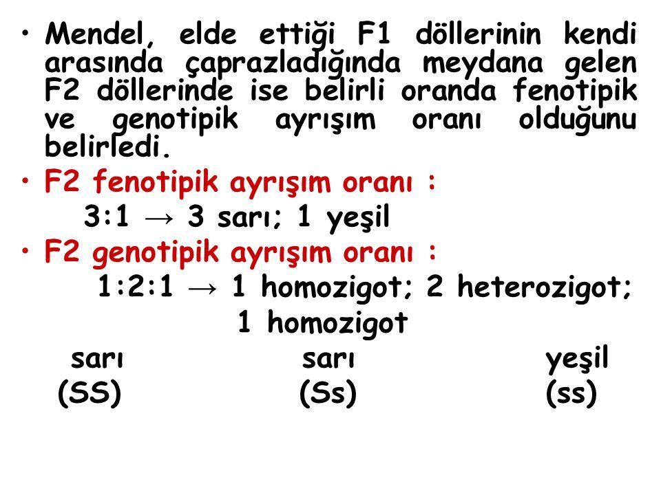 Mendel, elde ettiği F1 döllerinin kendi arasında çaprazladığında meydana gelen F2 döllerinde ise belirli oranda fenotipik ve genotipik ayrışım oranı o