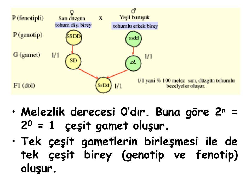 Melezlik derecesi 0'dır. Buna göre 2 n = 2 0 = 1 çeşit gamet oluşur. Tek çeşit gametlerin birleşmesi ile de tek çeşit birey (genotip ve fenotip) oluşu