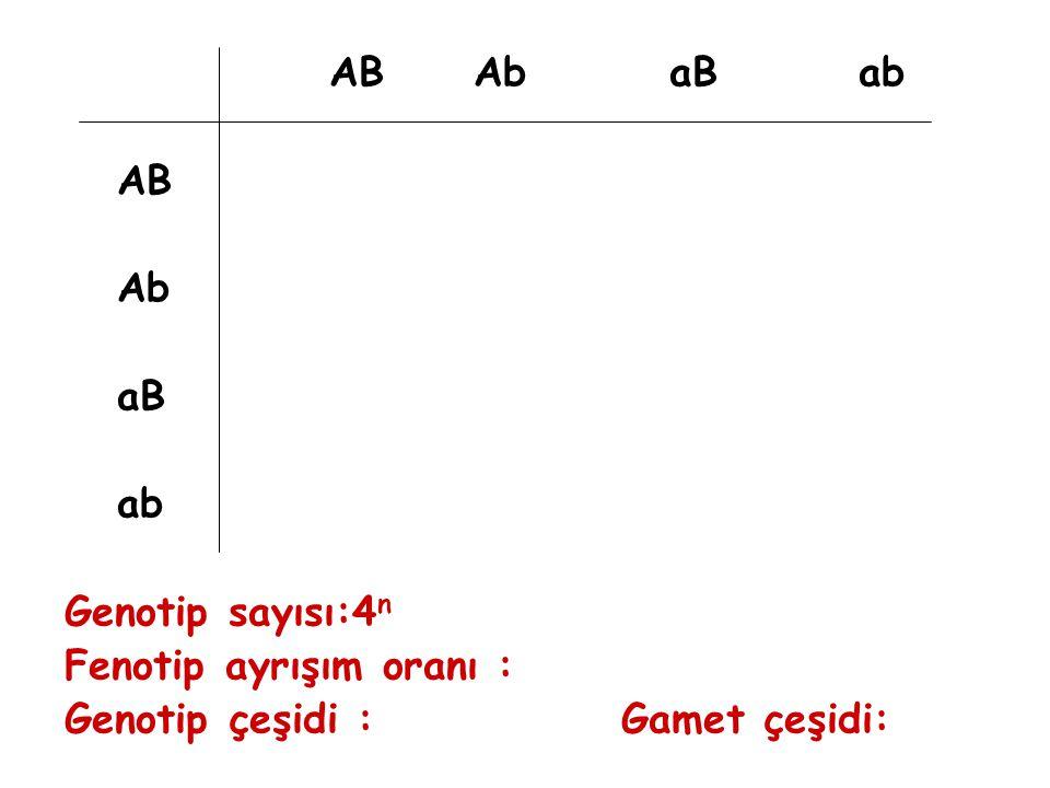 AB Ab aB ab AB Ab aB ab Genotip sayısı:4 n Fenotip ayrışım oranı : Genotip çeşidi : Gamet çeşidi: