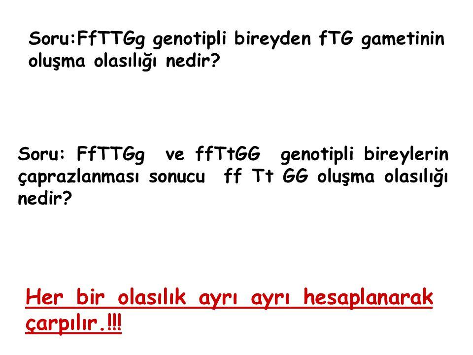 Soru:FfTTGg genotipli bireyden fTG gametinin oluşma olasılığı nedir? Soru: FfTTGg ve ffTtGG genotipli bireylerin çaprazlanması sonucu ff Tt GG oluşma