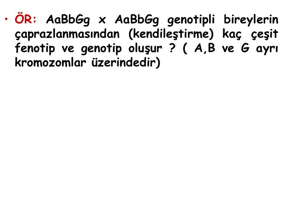 ÖR: AaBbGg x AaBbGg genotipli bireylerin çaprazlanmasından (kendileştirme) kaç çeşit fenotip ve genotip oluşur ? ( A,B ve G ayrı kromozomlar üzerinded